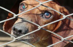 Shelter Rules Require Appointment, Evaluation Before Accepting Surrendered Dogs