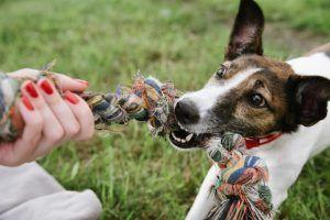 How to Train a Puppy - Dealing with a Mouthy Puppy