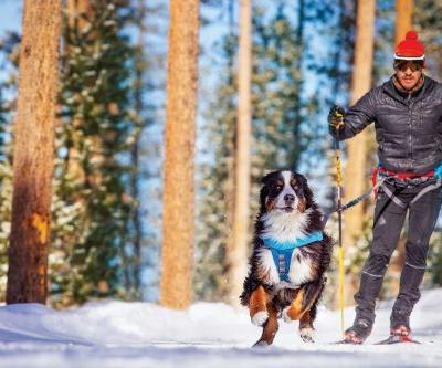 Winter's Next-Best Adventure: Skijoring with Your Dog
