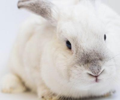 Is Your Makeup Brand Really Cruelty Free? You May Want To Take A Second Look