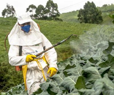 Many botanical extracts show promise as natural, alternative insecticides