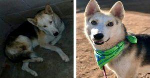 """Blind, Anxious Dog Loses 20 Pounds In A Mexican Shelter Before Getting His """"Second Chance"""""""