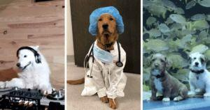 16 Of The Cutest Dog Posts During The Quarantine
