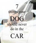 7 Things Your Dog Should Never Do in the Car