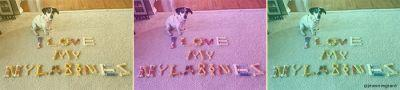 10 Funny Things You'll Notice When Your Dog Loves Nylabone