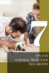7 Tips for National Train Your Dog Month