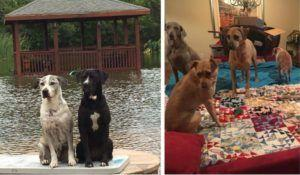 Texas Dog Rescuers Ride Out The Storm With Their 14 Dogs