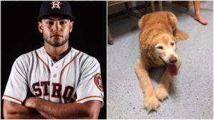 Houston Astros Pitcher Uses His Twitter To Reunite Lost Senior Dog With Family