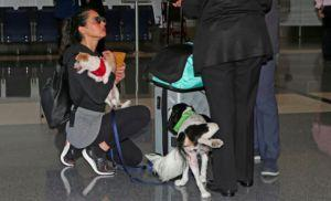 Actress Olivia Munn Defends Her Rescue Dog Amidst Rumors
