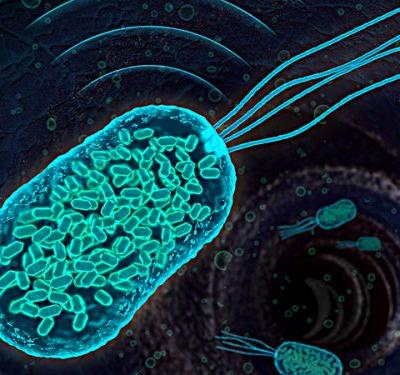 Ultrasound Tracks Therapeutic Microbes Deep Inside the Body