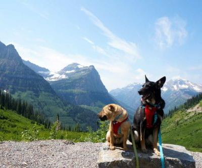 Visiting Glacier National Park With Dogs