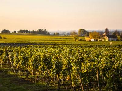 Bordeaux Winemakers Respond to Climate Change with Revolutionary New Regulations
