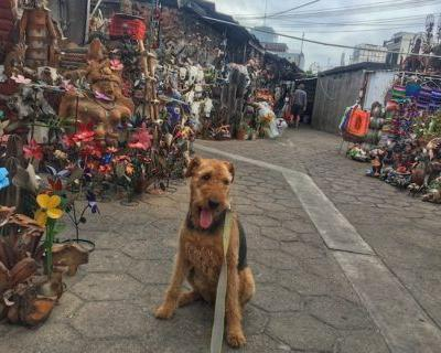 Traveling To Mexico With Your Dog