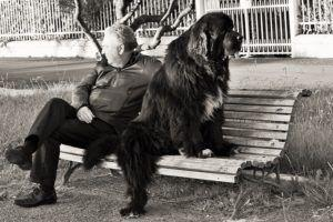 Why Do Some Dogs Gravitate Toward People Who Don't Like Pets?
