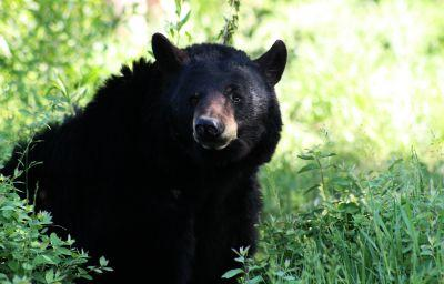 Family of roaming bears set to be euthanized get reprieve