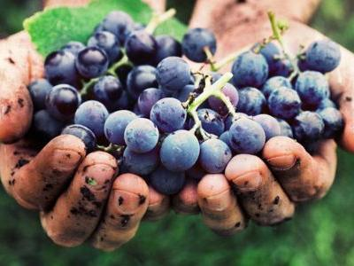 We Asked 9 Somms: Is Natural Wine Overrated?