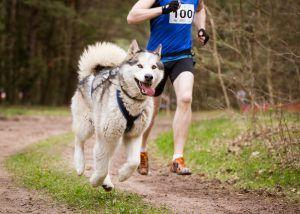 Dogs and Exercise
