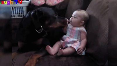 Beware, These 20 Ferocious Rottweilers Are Out To Get You