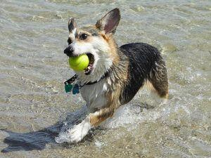 3 Things Your Corgi Loves More Than Anything