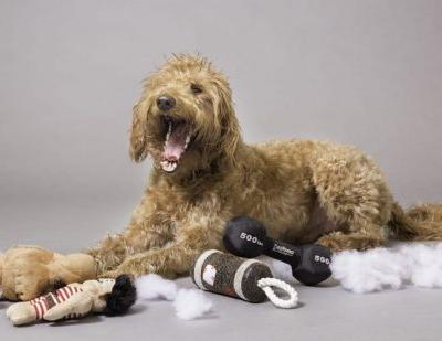 What Makes A Dog Hypoallegenic?