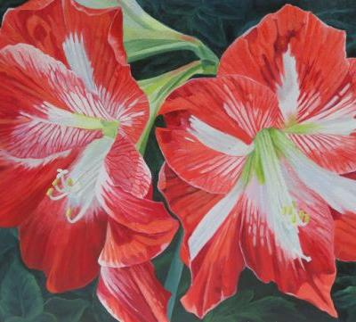 Amaryllis from the Garden