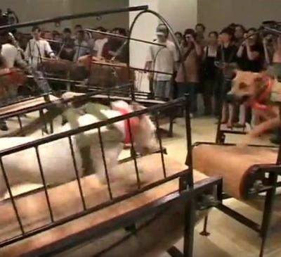 Guggenheim pulls dogs and insects from show after protest
