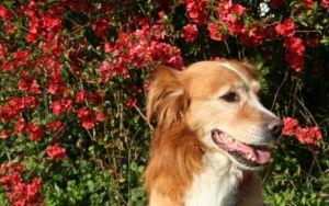 10 Best Essential Oils For Your Dog