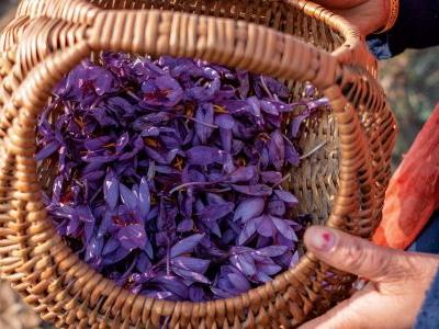 The World's Finest Saffron Is in Danger of Disappearing