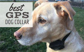 Best GPS Dog Collar: Roam if You Want To!