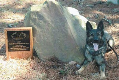 How Britt Went From Shelter Pup to Award-Winning Narcotics Dog