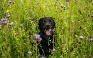 7 Tips For Choosing The Best Pet-Safe Essential Oils