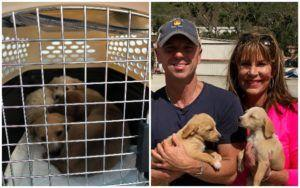 Kenny Chesney Pairs With Rescue Groups To Rescue 800+ Animals