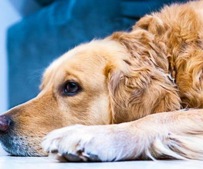 Top Veterinary Articles of the Week: Insulinomas, Patellar Luxation, and more