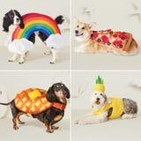 Bow Down to Target, Because We've Never Seen Pet Costumes This Good