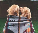 These 2 Adorable Golden Retrievers Are BFFs, and We Don't Deserve This Level of Cuteness