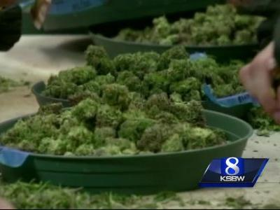 Report: California pot growers lagging in getting licenses