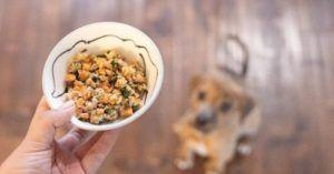 Fresh Cooked Dog Food Is Best. Are You Ready To Make Your Own?