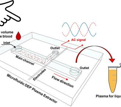 Extraction of Cell‐Free Whole Blood Plasma Using a Dielectrophoresis‐Based Microfluidic Device