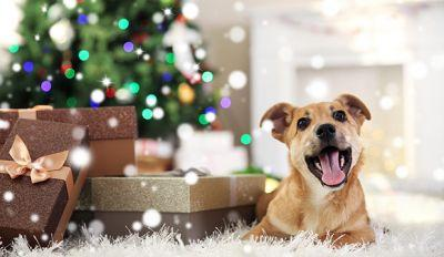 5 Perfect Christmas Gifts For Your Dog