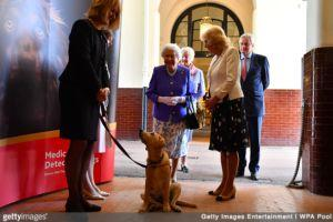 Queen, Duchess of Cornwall Mark Medical Detection Dogs 10th Anniversary