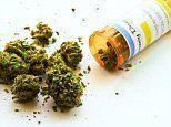 Medical marijuana does not help with chronic pain and PTSD