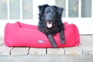 Is Your Dog a Cuddler? Barli Reviews the Martha Stewart Cuddler Bed