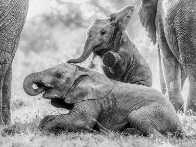 Photo gallery: 9 spectacular wildlife shots of elephants in the wild