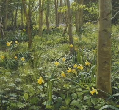 Daffodil Wood at Manton