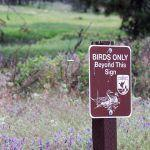 Duck Stamps and the Best National Wildlife Refuges for Birding