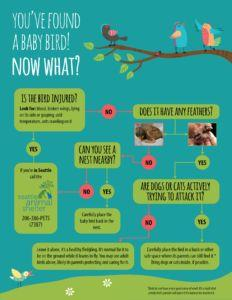 You've found a baby bird. now what?