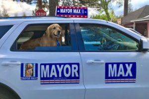 Golden Retriever Serves As Mayor In Small Town, And Even Has Dog Deputies!