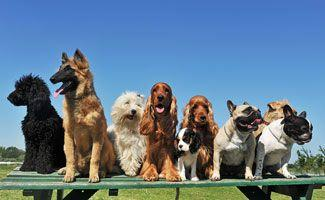 Pet Insurance Quotes: Compare Different Breeds And Ages