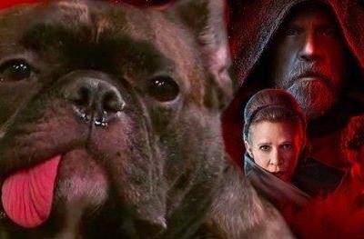 Carrie Fisher's Dog Watching Star Wars 8 Trailer Will