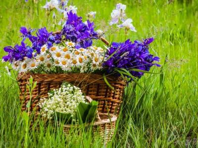 Flowers for Alzheimer's patients: Several species of iris has been found to protect against the disease